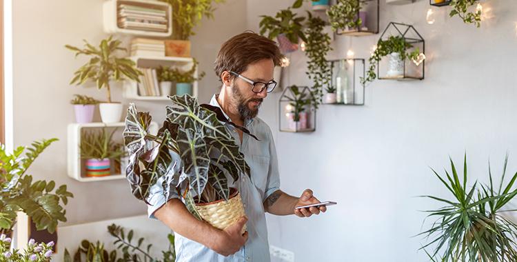plantas que purificam o ar dos ambientes