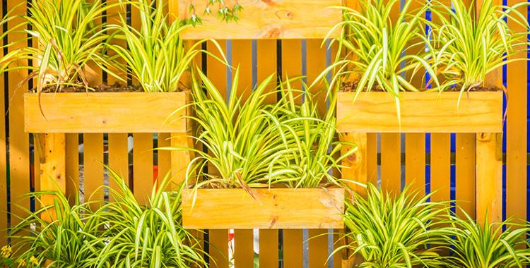 Como criar um jardim vertical em apartamento