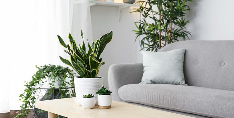 foto da sala de estar de um apartamento decorado com paisagismo
