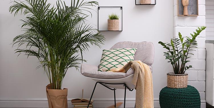 As plantas também podem usadas na decoração de apartamentos sem varanda.