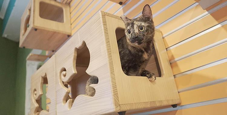 """Foto de um gato dentro de sua """"casinha"""", um móvel instalado na parede feito para gatos."""