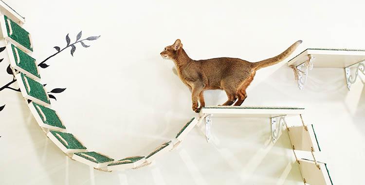 Gato em cima de móvel construído para pets