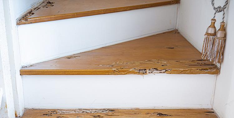 Uma fotografia que ilustra o estrago feito por cupins numa escada.