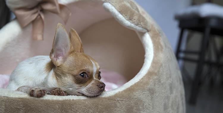 Cachorro deitado em sua própria cama, uma cama decorativa feita para pets